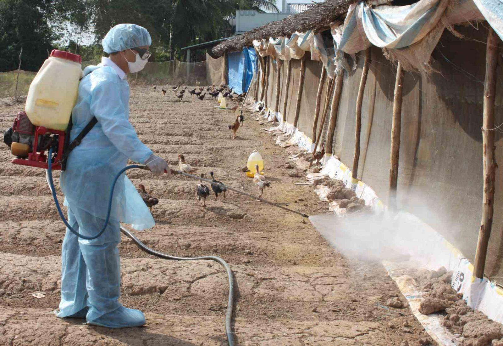 Hướng dẫn kỹ thuật chăn nuôi gà công nghiệp - 55bdddbc4bb99