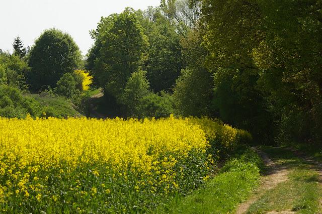 Hautes-Lisières (Rouvres, 28), 20 avril 2011. Photo : J.-M. Gayman