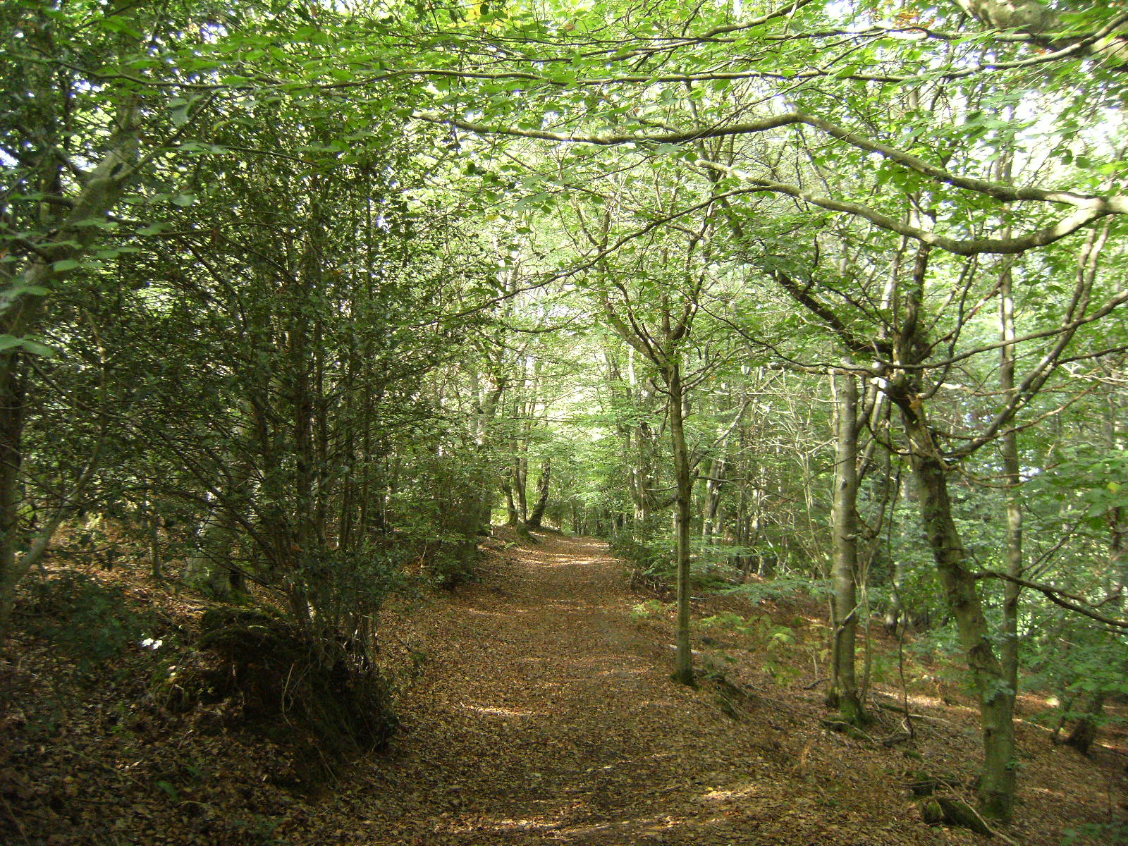 DSCF9682 Through Grinstead Wood