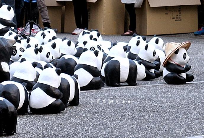 14 紙貓熊 1600貓熊之旅