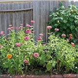 Gardening 2011 - 100_9323.JPG