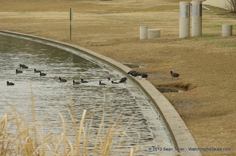 01-26-13 White Rock Lake - IMGP4358.JPG