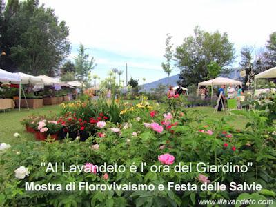 Festa delle salvie al lavandeto di assisi l 39 ora del - Il giardino dei ciliegi assisi ...