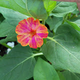 Gardening 2011 - 100_7780.JPG