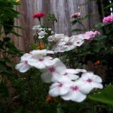 Gardening 2012 - 115_1994.JPG