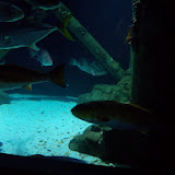 Downtown Aquarium - 116_3908.JPG