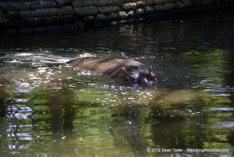04-07-12 Homosassa Springs State Park - IMGP4540.JPG