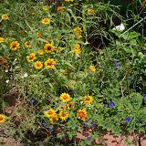 Gardening 2010, Part Three - 101_4848.JPG