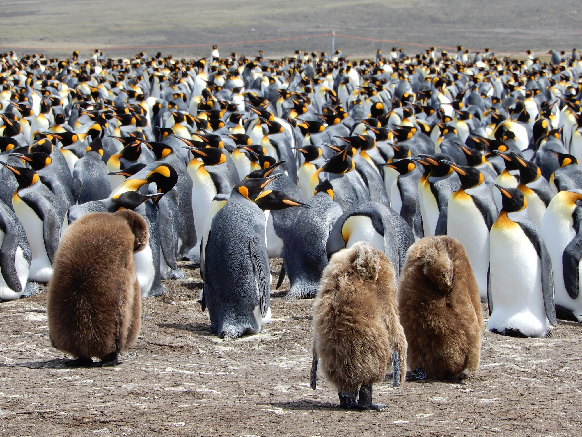 Reisinformatie Falklandeilanden