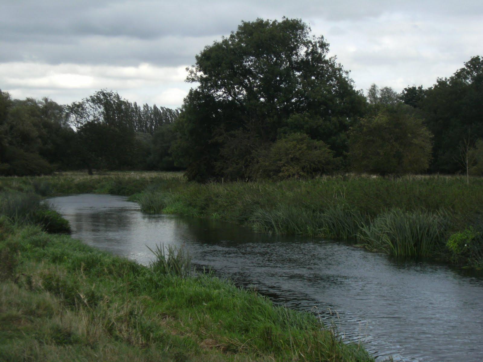 DSCF9447 Houghton water meadows