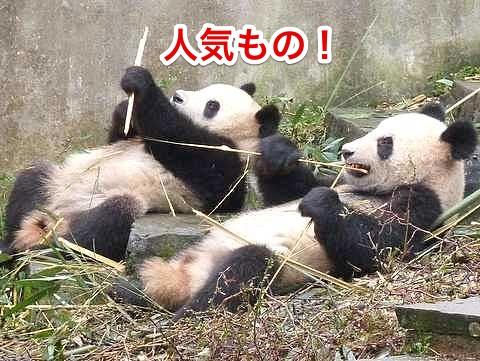 人気者パンダ