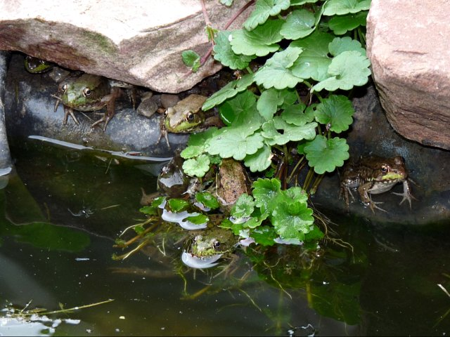 8 frogs hiding