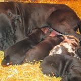 Gigi's babies @ 3 weeks