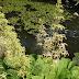 Jardin japonais contemporain