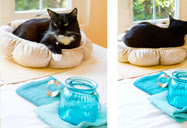 nelly-cat-turquoise