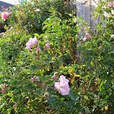 Gardening 2012 - 115_1774.JPG