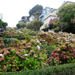 lombard street in San Francisco, California, United States