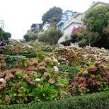 lombard street in San Francisco, California, United States
