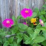 Gardening 2012 - 115_2407.JPG