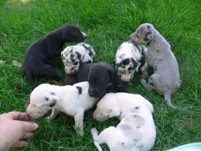 Graysee's litter @ almost 3 weeks