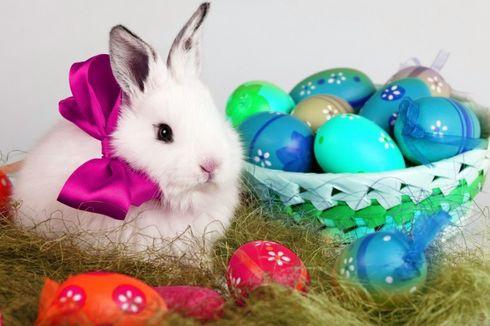 Mengenal Budaya Kelinci Paskah