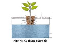 Các cách trồng rau thủy canh - 56874bc1c445a
