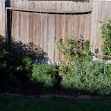 Gardening 2013 - 115_5365.JPG