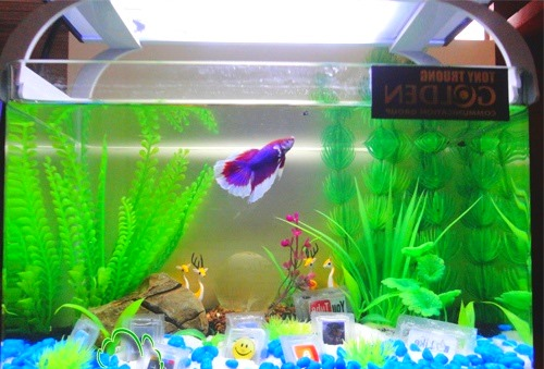 5-gallon-betta-fish-tank