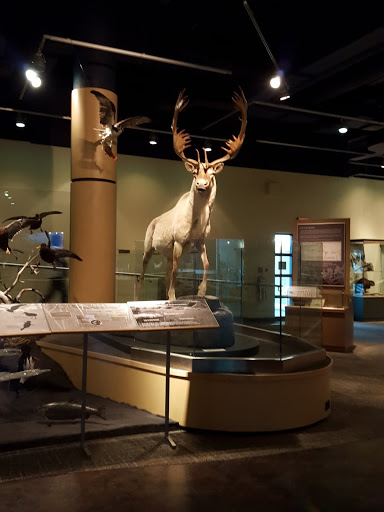 Animals from Newfoundland and Labrador. Newfoundland and Labrador History Comes Alive at The Rooms