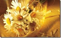 margaritas flores (57)