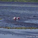04-06-12 Myaka River State Park - IMGP4468.JPG