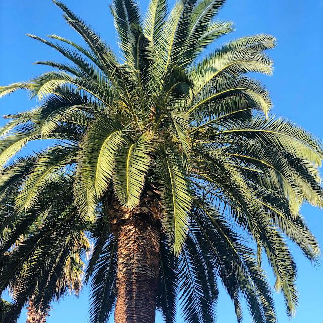 travel-blog-instagram-spots-palm-tree-bari