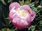 Rose-printemps... 40 x 50 Mai 2010