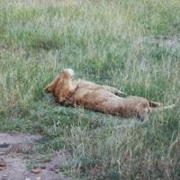 2010-04-15 - 1-2eme safari