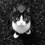 Что значит если тебе приснился черный кот