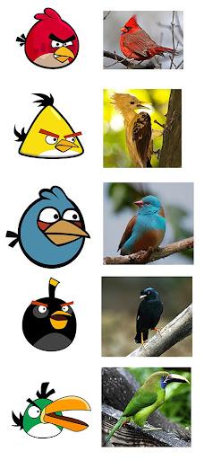angrybirds rl Angry Birds na vida real