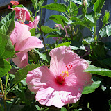 Gardening 2012 - 115_2529.JPG