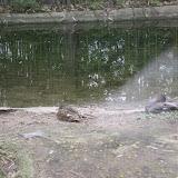 Zoo Snooze 2015 - IMG_7346.JPG