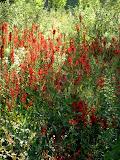 Meadow Wow Wow