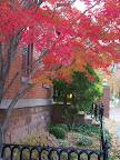Fall foliage on Atkinson Street