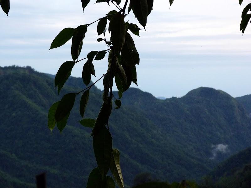 TAIWAN  Dans la region d ALISHAN - P1130835.JPG