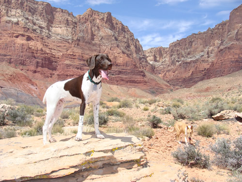 Mac at the Vermillion Cliffs, AZ
