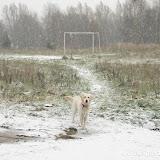 Ślady na śniegu (29.11.2008r.)