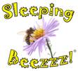 Sleeping Beezzz