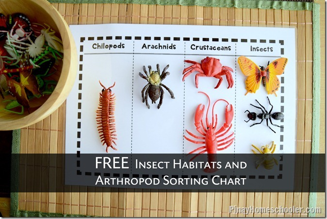 FREE Insect Habitats and Arthropods Sorting