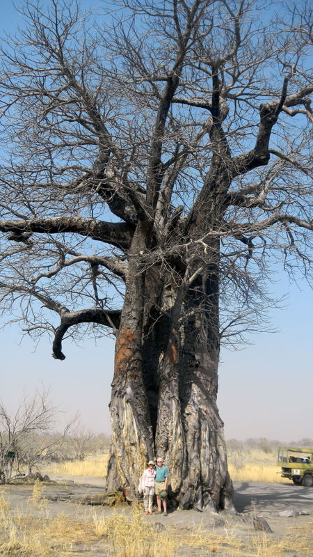 A 1,700 year old Baobob tree