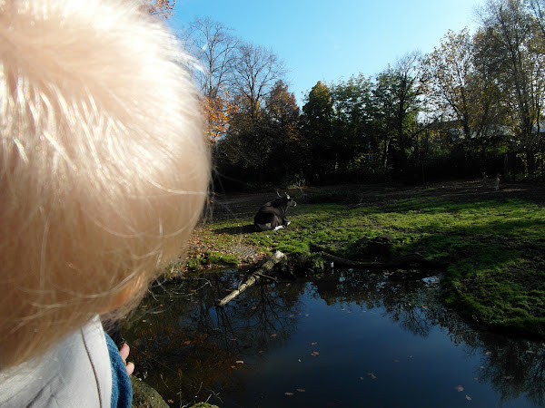 Eon ziet een koe