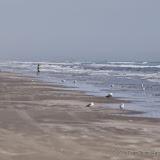 02-07-15 Corpus Christi & South Padre Island - _IMG0428.JPG