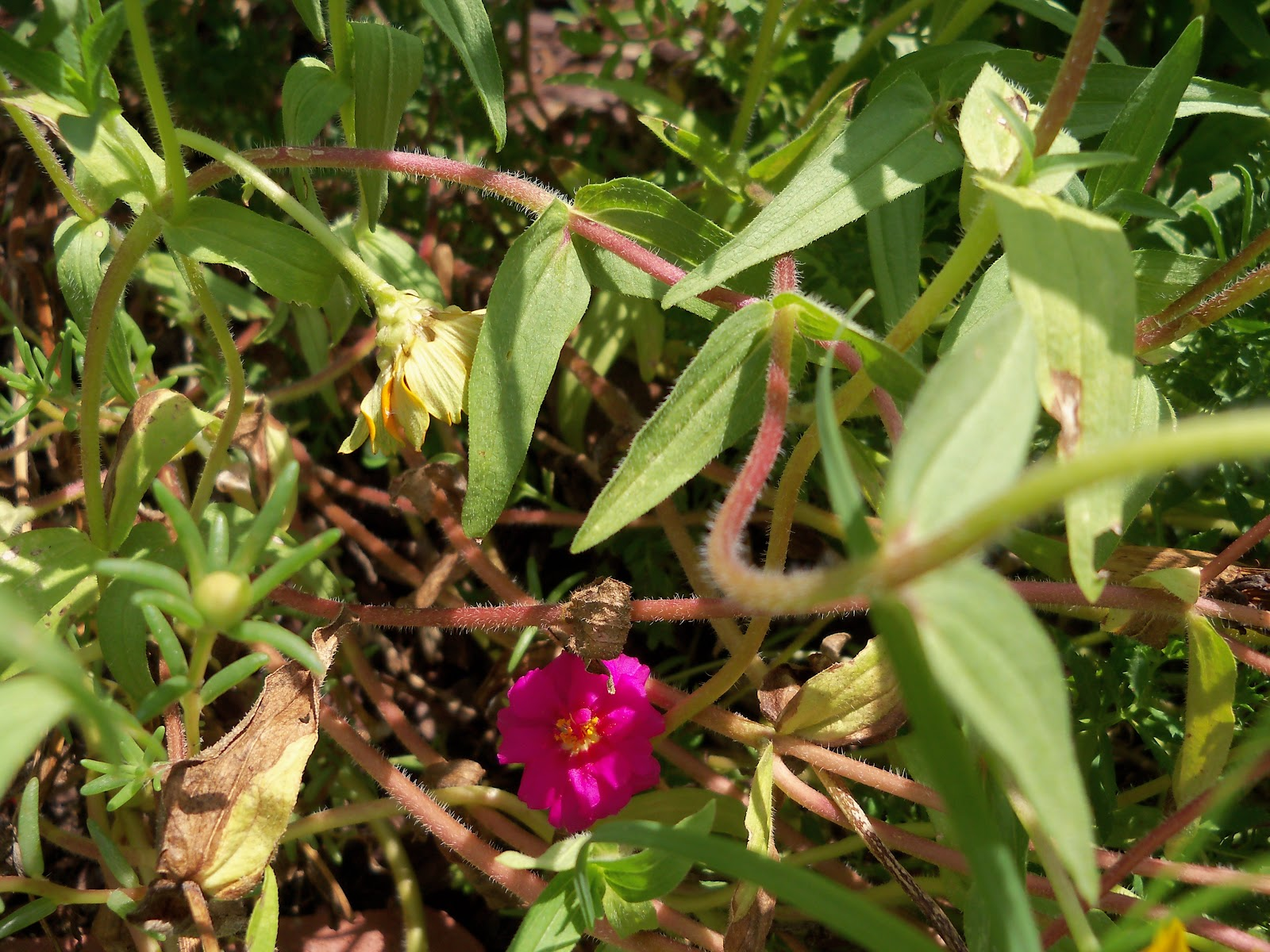 Gardening 2010, Part Three - 101_5092.JPG
