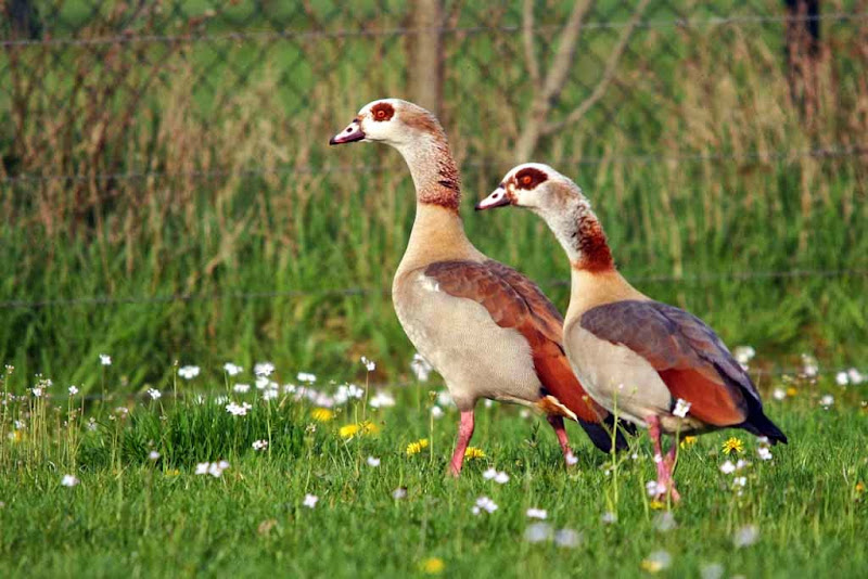 Vogels en dieren - IMG_6403.JPG